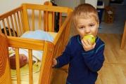 <p>Ségra ještě jablko nechce</p>